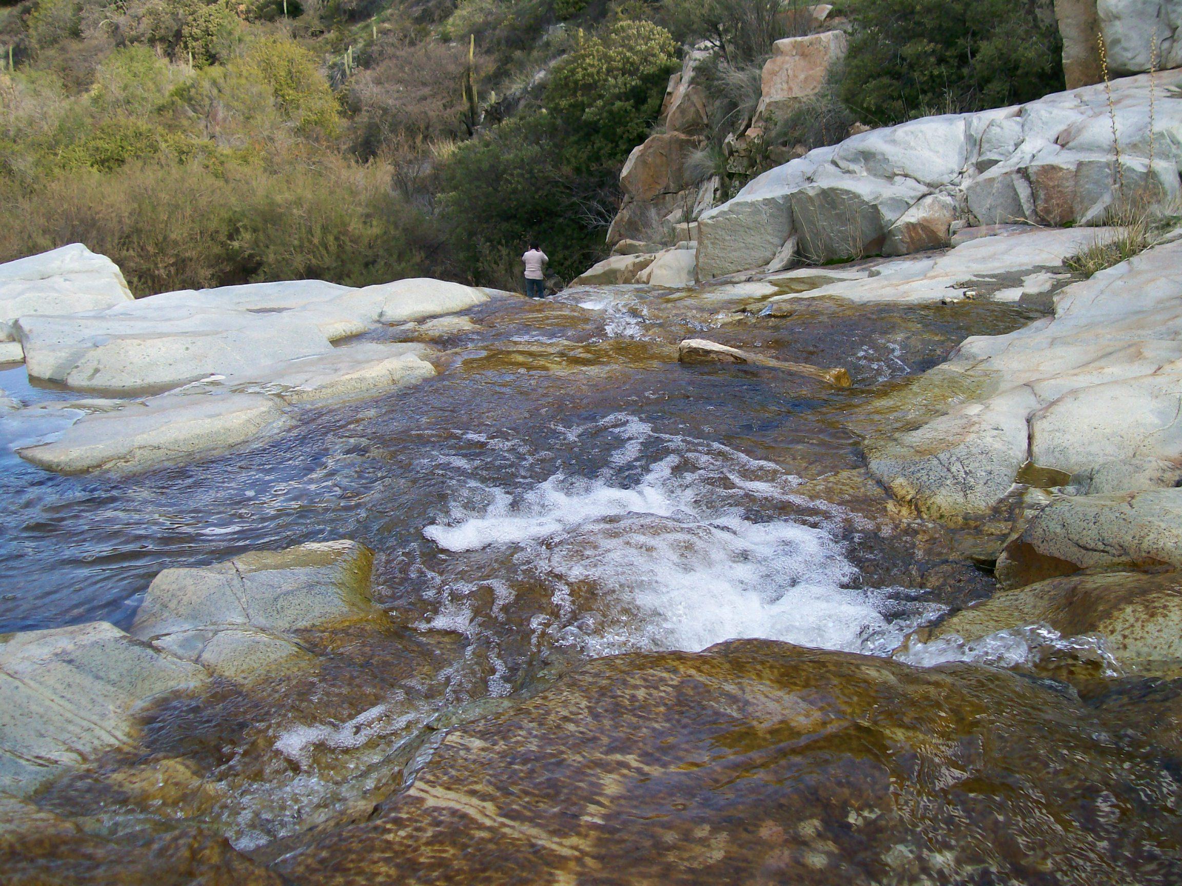 El tranque lo mar n y el bosque nativo en caleu el for Viveros en nunoa