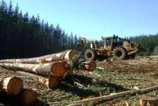 forestal1
