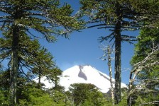 Recuperación de los bosques chilenos