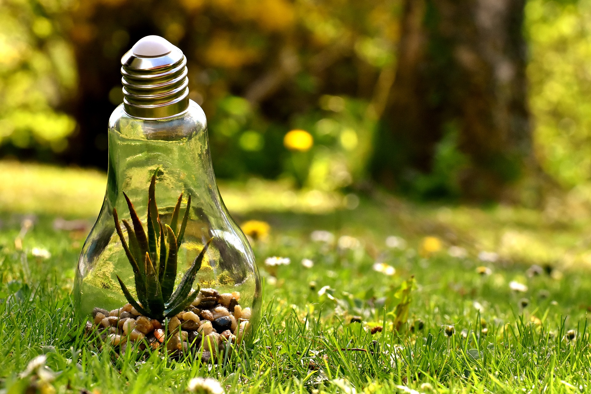 El Medio Ambiente: Algunas Cuestiones Ambientales Y La Política Ambiental